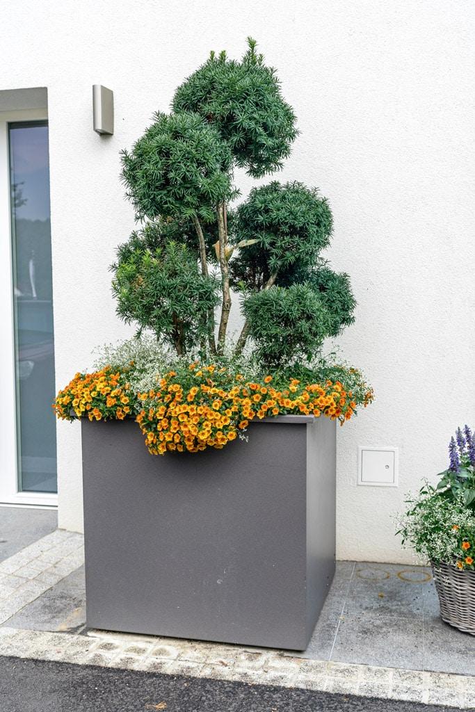 S 23 a | quadratischer Riesen-Alublumentopf grau beschichtet mit Blumen & Busch bepflanzt | Svoboda