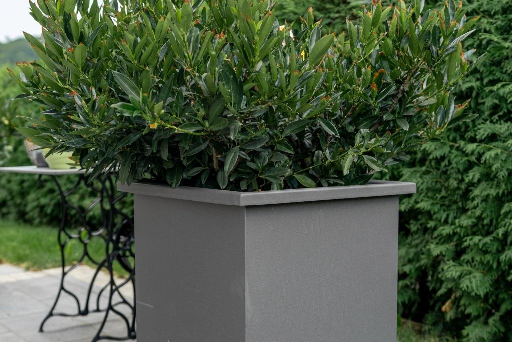 S 23 c | grau beschichteter Blumentopf aus Aluminium, Quadratisch, hoch, mit Busch | Svoboda