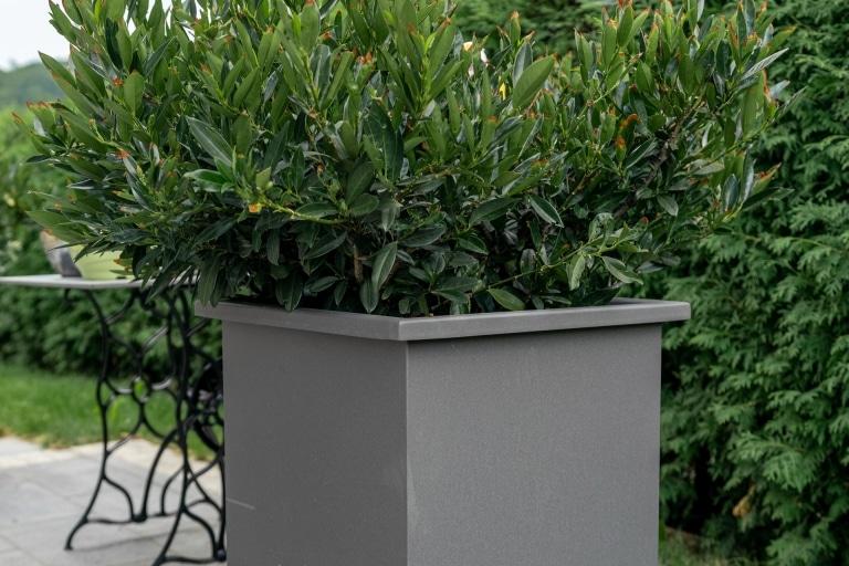 S 23 c   grau beschichteter Blumentopf aus Aluminium, Quadratisch, hoch, mit Busch   Svoboda