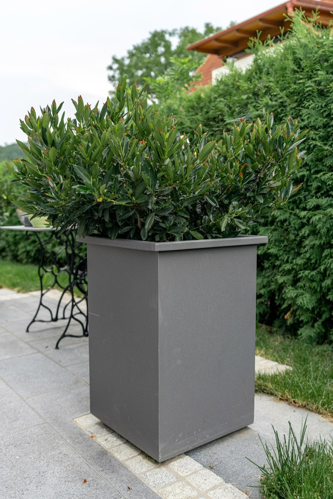 S 23 c | XXL-Blumentopf aus pulverbeschitetem Aluminium grau mit Busch bepflanzt | Svoboda Metall